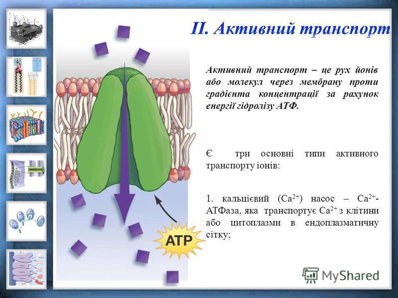 Активний транспорт – це рух йонів або молекул через мембрану проти градієнта концентрації за рахунок енергії гідролізу АТФ. Є три основні типи активного транспорту іонів: 1. кальцієвий (Са 2+ ) насос – Са 2+ - АТФаза, яка транспортує Са 2+ з клітини