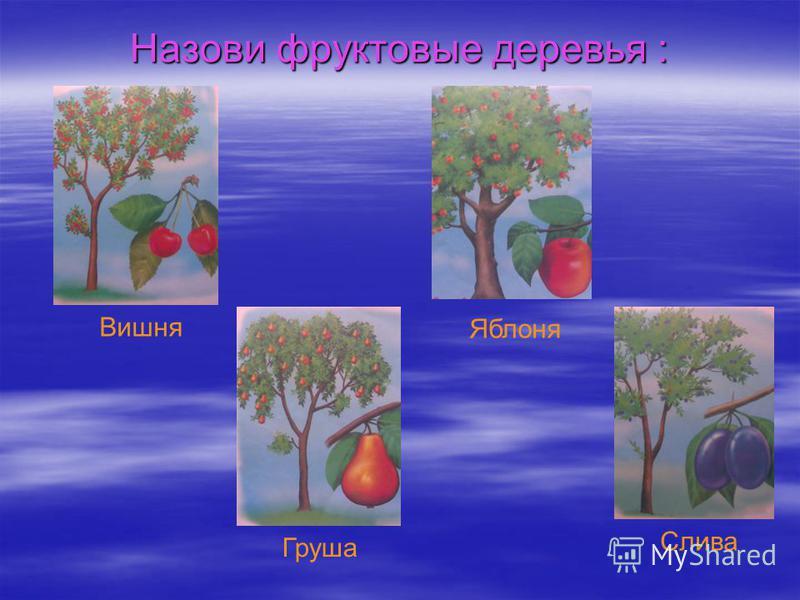 Назови фруктовые деревья : Вишня Яблоня Груша Слива