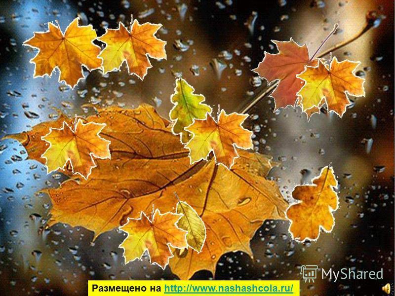 По грибы по ягоды… рябина рябина голубика голубика морошка морошка боровик боровик лисички лисички опята опята