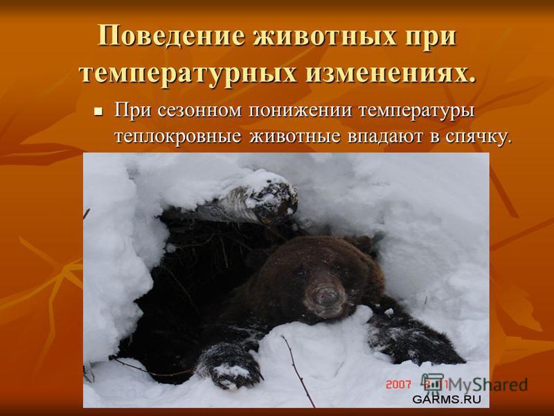 Поведение животных при температурных изменениях. При сезонном понижении температуры теплокровные животные впадают в спячку.