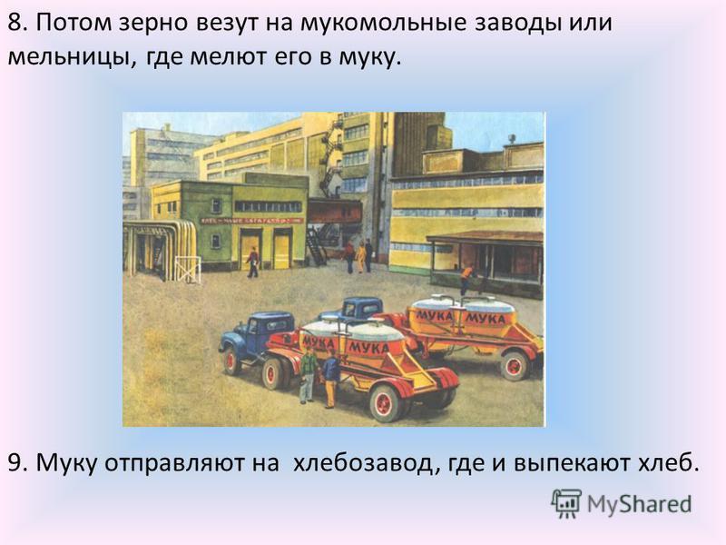 8. Потом зерно везут на мукомольные заводы или мельницы, где мелют его в муку. 9. Муку отправляют на хлебозавод, где и выпекают хлеб.