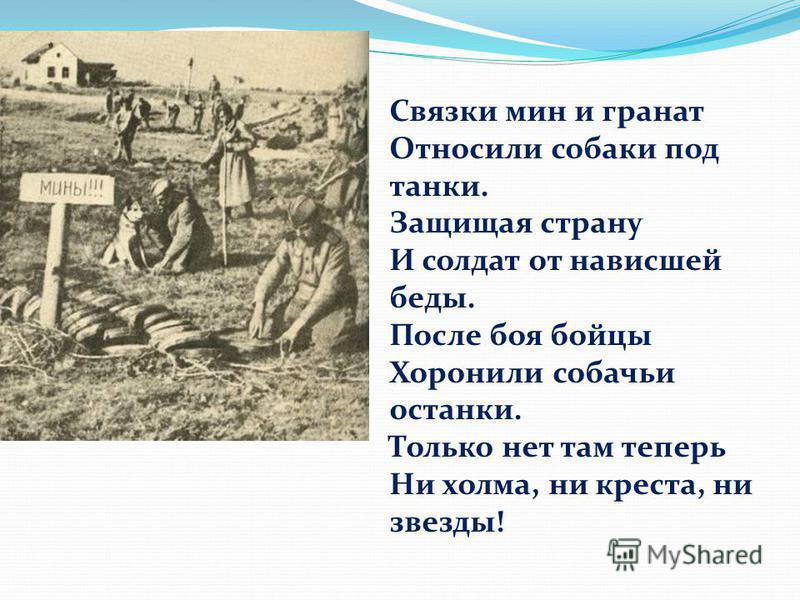 Связки мин и гранат Относили собаки под танки. Защищая страну И солдат от нависшей беды. После боя бойцы Хоронили собачьи останки. Только нет там теперь Ни холма, ни креста, ни звезды!