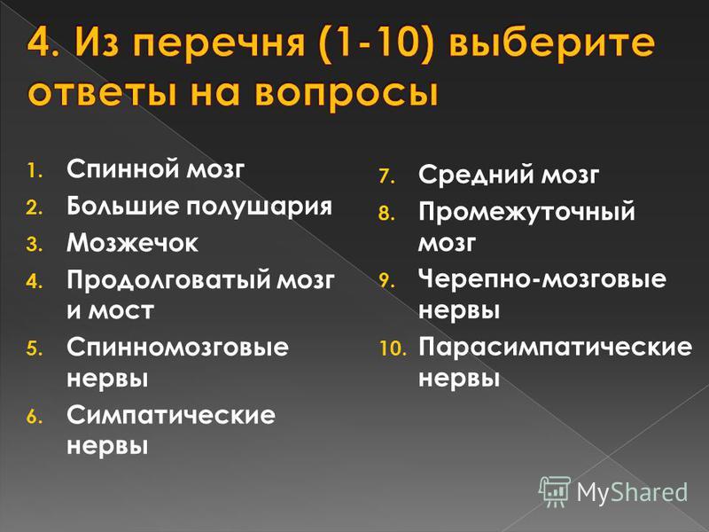 1. Спинной мозг 2. Большие полушария 3. Мозжечок 4. Продолговатый мозг и мост 5. Спинномозговые нервы 6. Симпатические нервы 7. Средний мозг 8. Промежуточный мозг 9. Черепно-мозговые нервы 10. Парасимпатические нервы