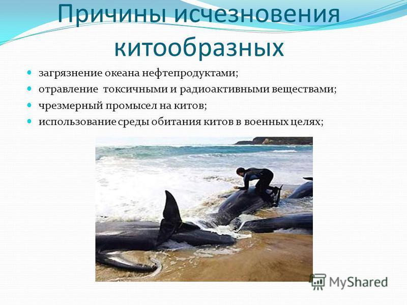 Причины исчезновения китообразных загрязнение океана нефтепродуктами; отравление токсичними и радиоактивними веществами; чрезмерный промысел на китов; использование среды обитания китов в военных целях;