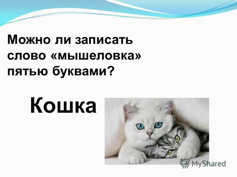 Можно ли записать слово «мышеловка» пятью буквами? Кошка