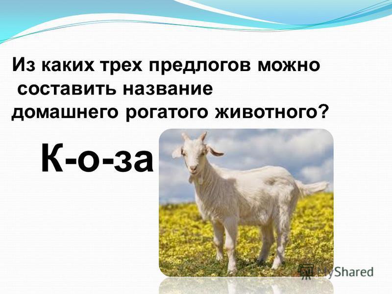 Из каких трех предлогов можно составить название домашнего рогатого животного? К-о-за