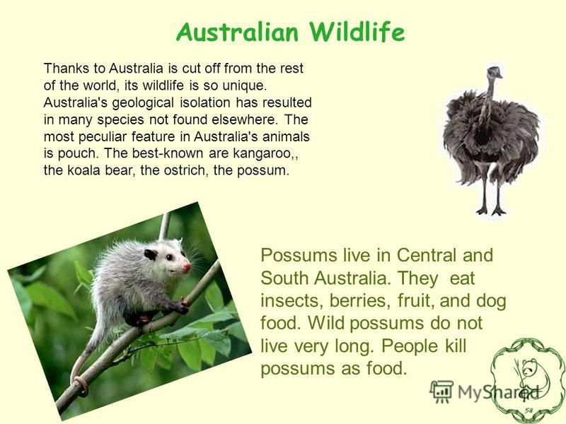 Thanks to Australia is cut off from the rest of the world, its wildlife is so unique. Australia's geological isolation has resulted in many species not found elsewhere. The most peculiar feature in Australia's animals is pouch. The best-known are kan