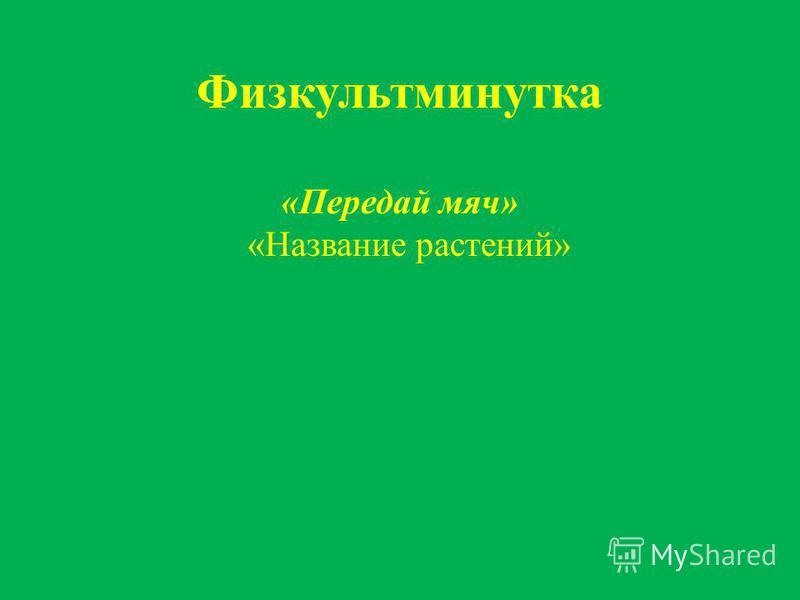 Физкультминутка «Передай мяч» «Название растений»