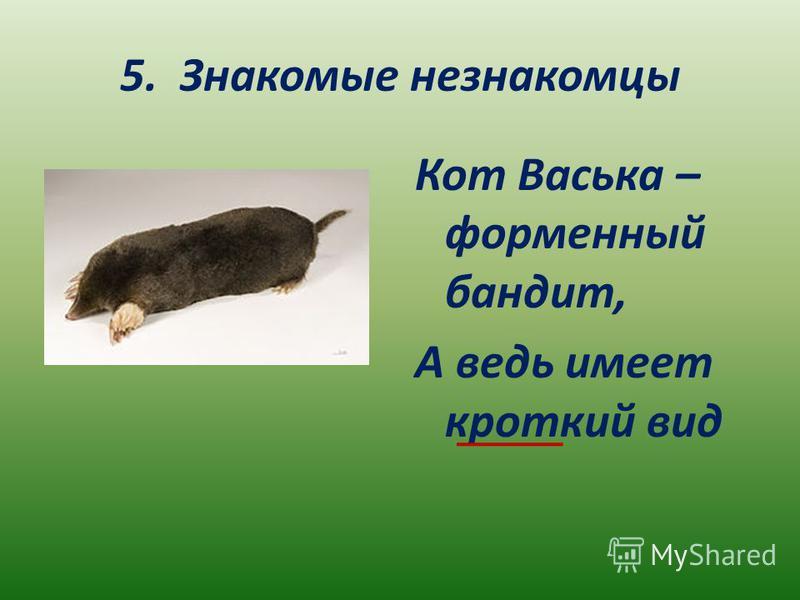 5. Знакомые незнакомцы Кот Васька – форменный бандит, А ведь имеет кроткий вид