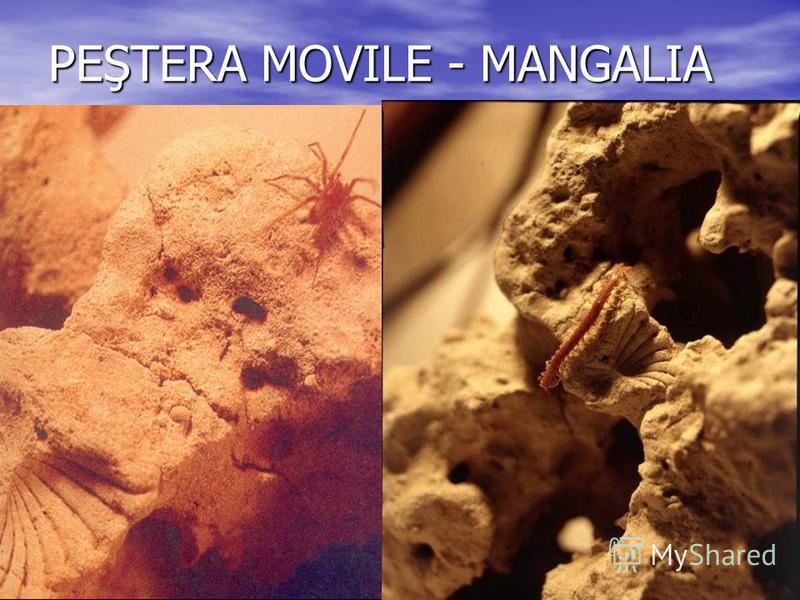 PEŞTERA MOVILE - MANGALIA