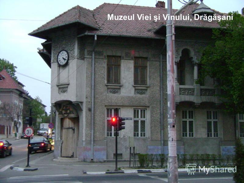 Muzeul Viei şi Vinului, Drăgăşani
