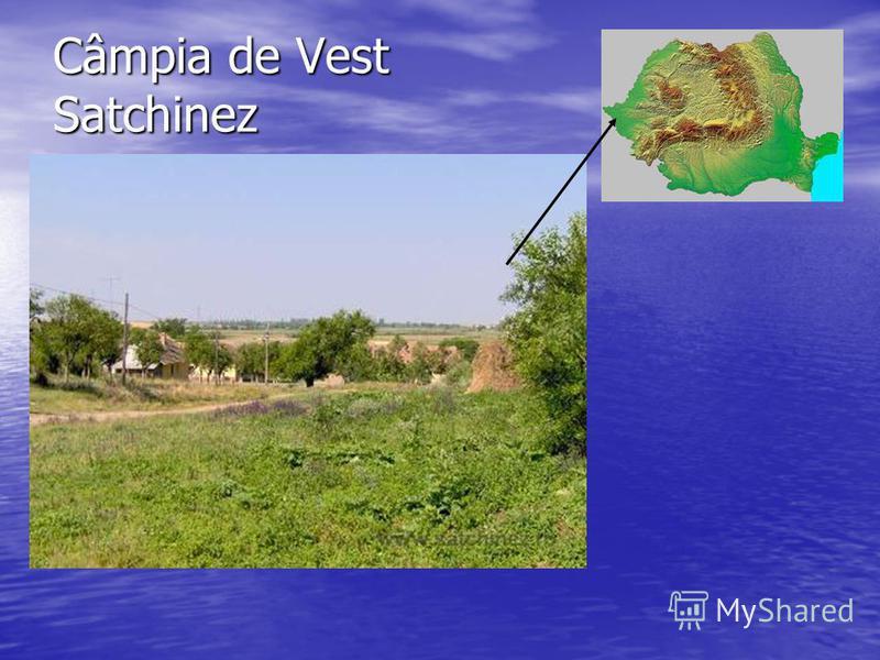 Câmpia de Vest Satchinez