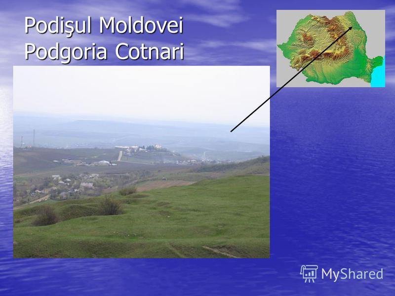 Podişul Moldovei Podgoria Cotnari