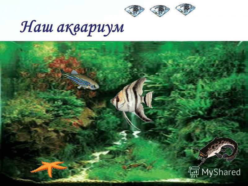 Page 17 Проверка. Ребята с восхищением смотрели в аквариум на ярких рыбок.
