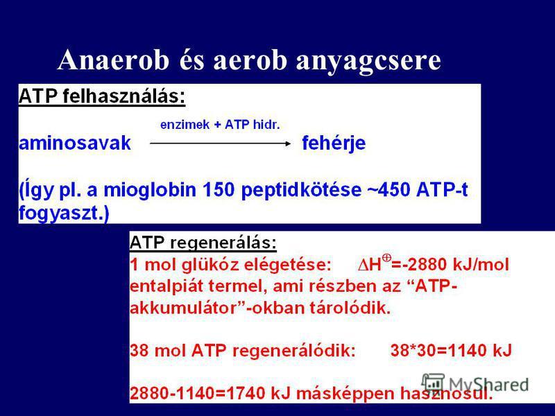 Anaerob és aerob anyagcsere