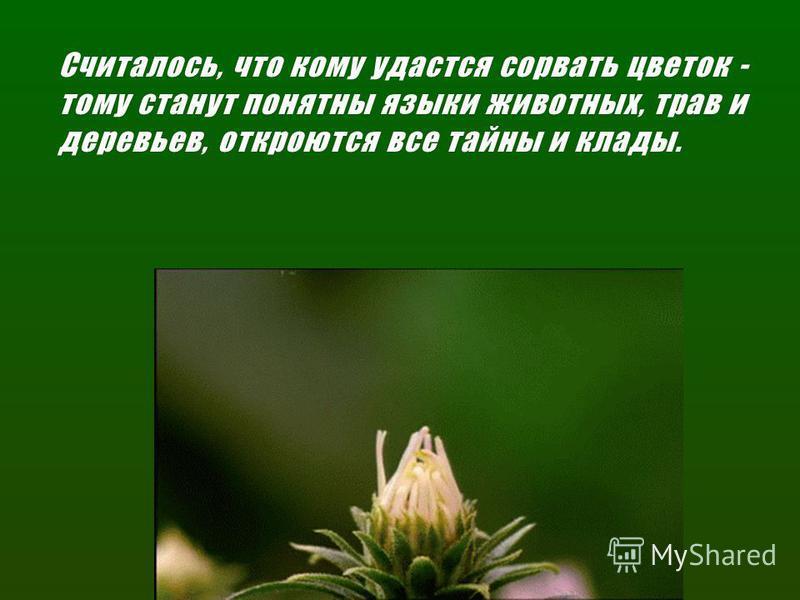 Считалось, что кому удастся сорвать цветок - тому станут понятны языки животных, трав и деревьев, откроются все тайны и клады.