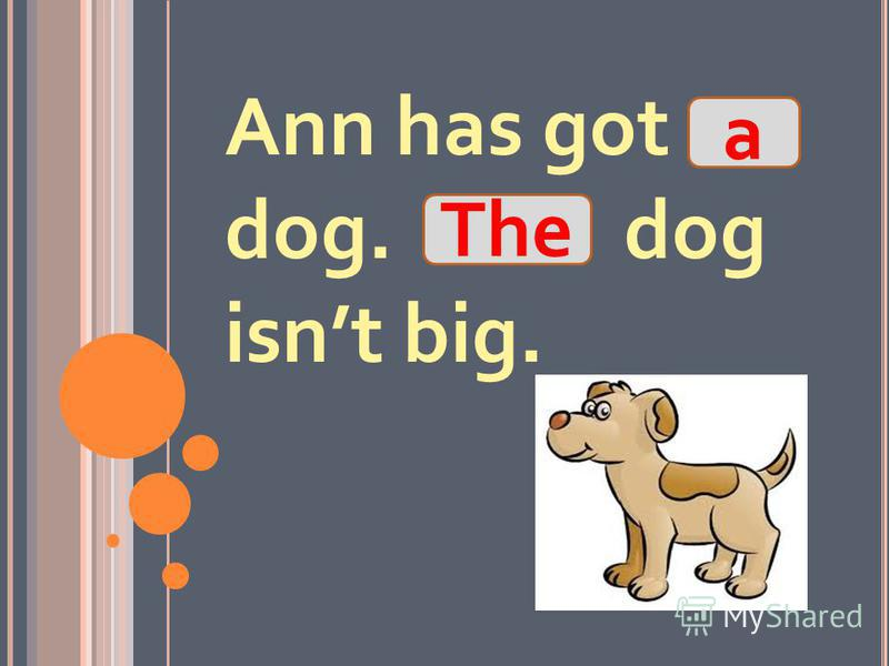 Ann has got dog. dog isnt big. The a