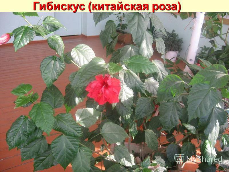 показать  комнатных растений