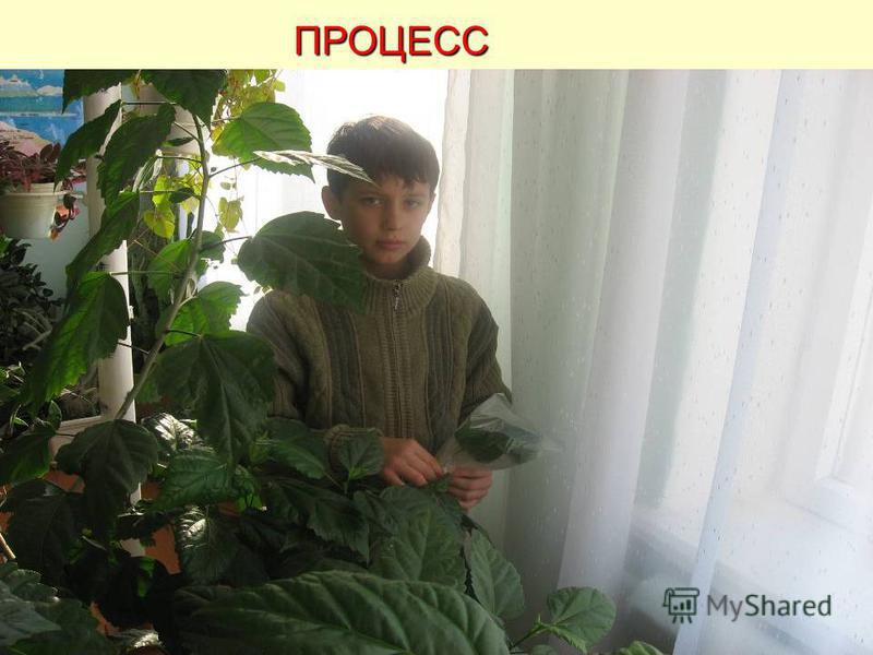 Часть I «ИСПАРЕНИЯ ВОДЫ ИЗ РАСТЕНИЙ» ЦЕЛЬ ЭКСПЕРИМЕНТА: показать, как растение теряет влагу через испарение. ТИП: экспериментальный МАТЕРИАЛЫ: растение в горшочке, полиэтиленовый пакетик, клейкая лента. ИСПОЛНИТЕЛЬ: Цицимушкина Евгения