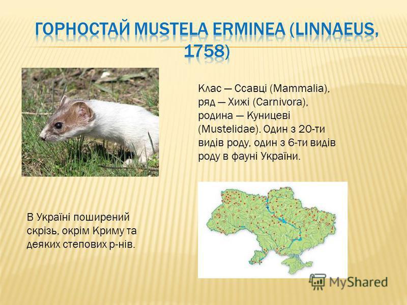 Клас Ссавці (Mammalia), ряд Хижі (Carnivora), родина Куницеві (Mustelidae). Один з 20-ти видів роду, один з 6-ти видів роду в фауні України. В Україні поширений скрізь, окрім Криму та деяких степових р-нів.