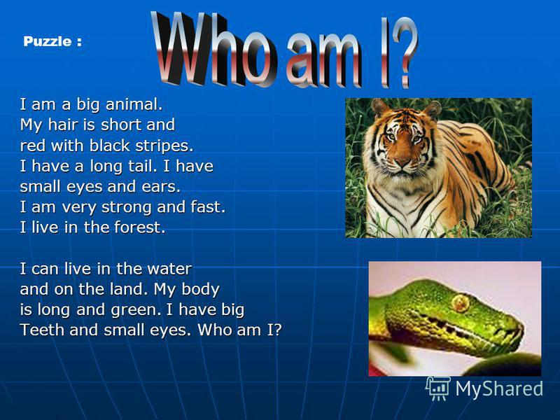 I am a big animal. My hair is short and red with black stripes. I have a long tail. I have small eyes and ears. I am very strong and fast. I live in the forest. I can live in the water and on the land. My body is long and green. I have big Teeth and