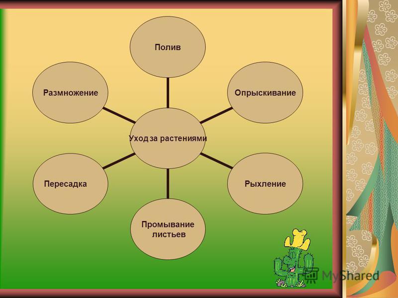 Комнатные растения имеют много полезных свойств: -защищают от пыли и шума; -улучшают микрофлору воздуха; -увеличивают влажность воздуха; -уничтожают вредоносные микроорганизмы; -поднимают настроение, ибо они прекрасны; -снимают нервное напряжение ; -