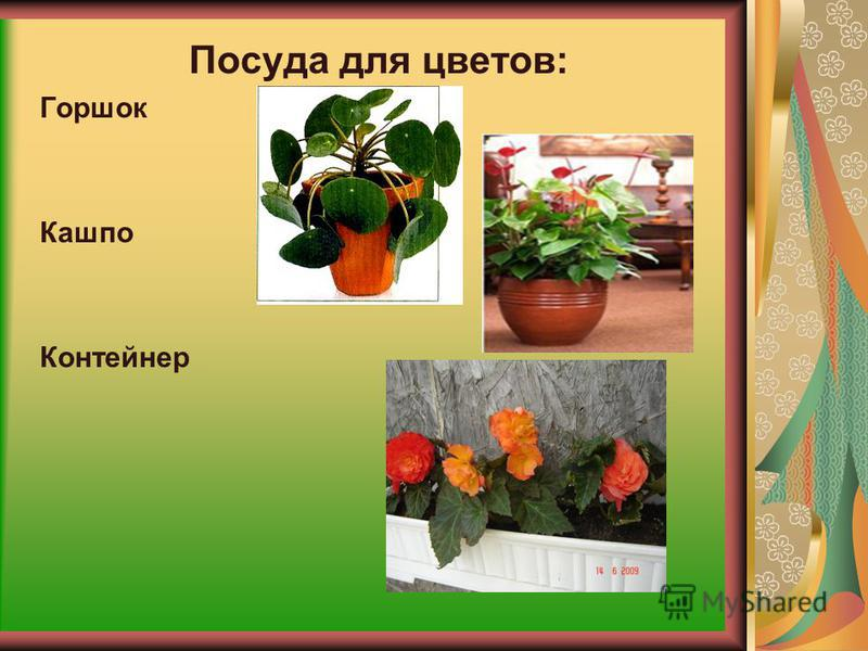 Размножение комнатных растений 1. Семенами(кактусы, бегонии, цикламены); 2.Черенками(лимон, традесканция, мирт); 3. Отрезками стебля( монстера, диффенбахия); 4. Делением куста(папоротники, сансевера); 5.Прививка(кактусы, цитрусовые)