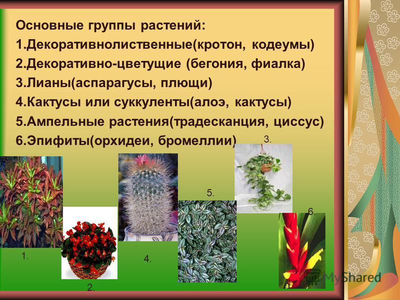 Где же выращивали и на чем размещали комнатные растения?