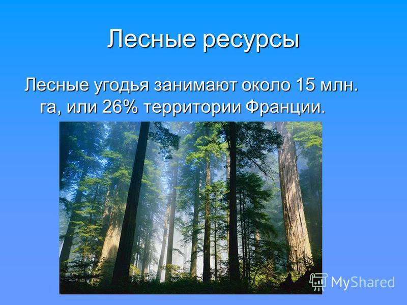 Лесные ресурсы Лесные угодья занимают около 15 млн. га, или 26% территории Франции.