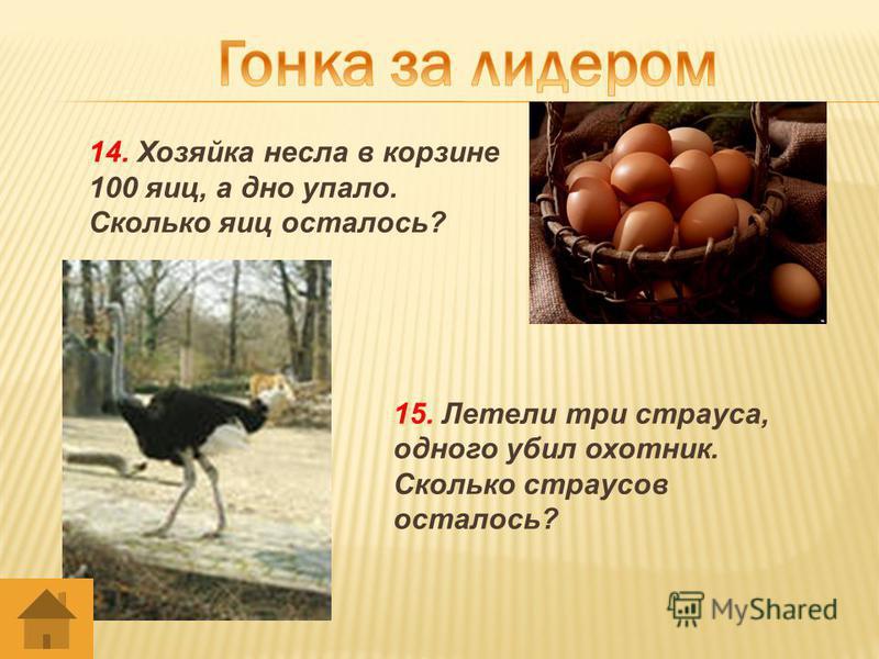 14. Хозяйка несла в корзине 100 яиц, а дно упало. Сколько яиц осталось? 15. Летели три страуса, одного убил охотник. Сколько страусов осталось?