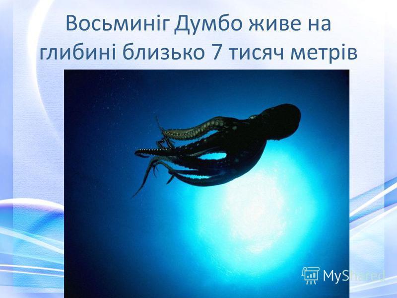 Восьминіг Думбо живе на глибині близько 7 тисяч метрів