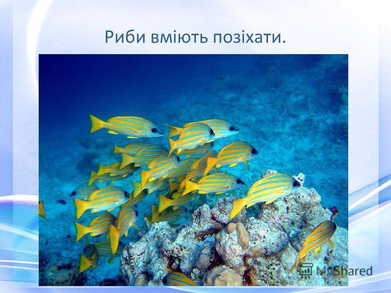 Риби вміють позіхати.