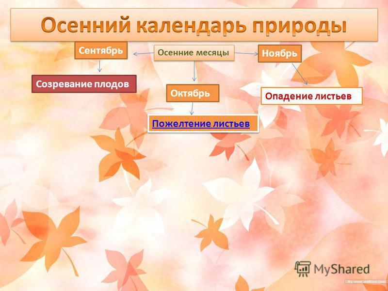 Осенние месяцы Сентябрь Октябрь Ноябрь Созревание плодов Пожелтение листьев Опадение листьев