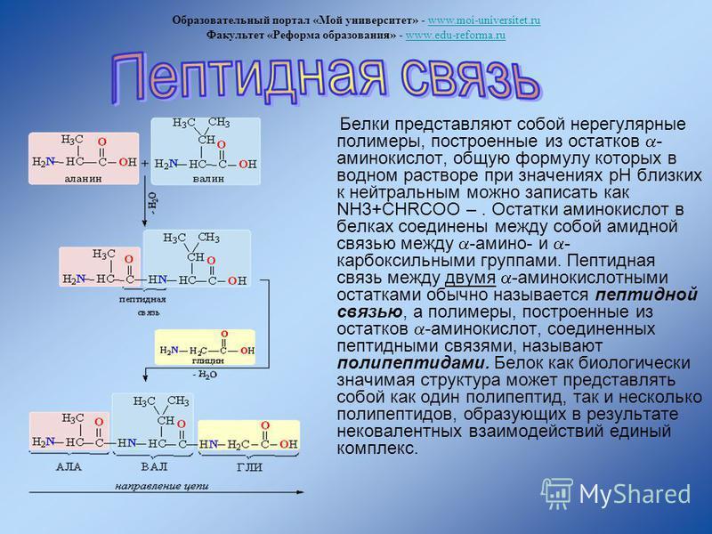 Белки представляют собой нерегулярные полимеры, построенные из остатков - аминокислот, общую формулу которых в водном растворе при значениях pH близких к нейтральным можно записать как NH3+CHRCOO –. Остатки аминокислот в белках соединены между собой