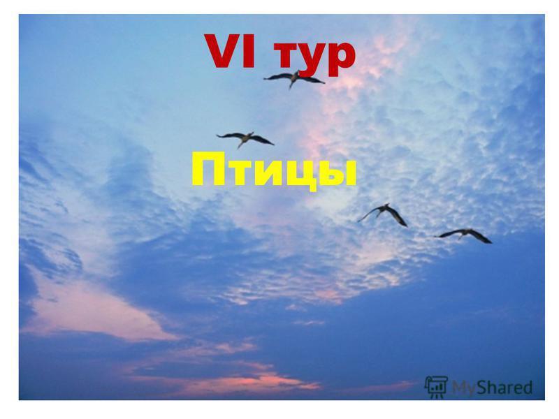 VI тур Птицы