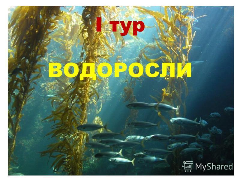 I тур ВОДОРОСЛИ