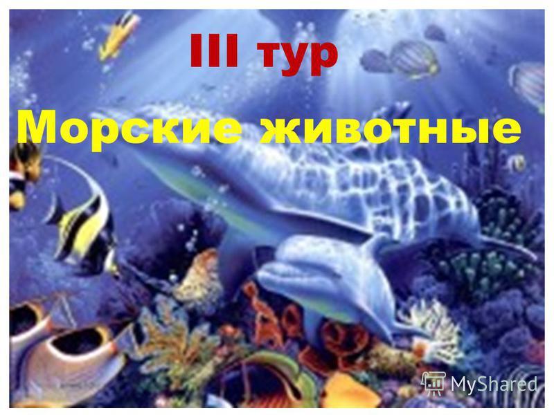 III тур Морские животные