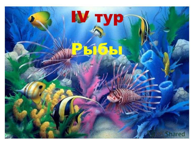 IV тур Рыбы