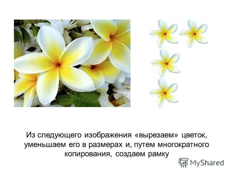 Из следующего изображения «вырезаем» цветок, уменьшаем его в размерах и, путем многократного копирования, создаем рамку