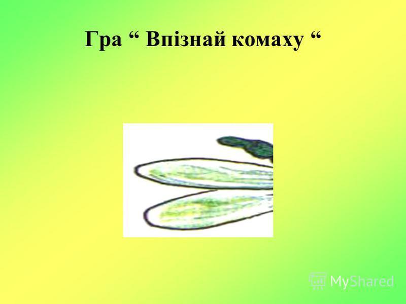Гра Впізнай комаху