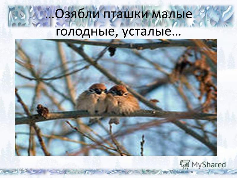 …Озябли пташки малые голодные, усталые… 11.08.20157