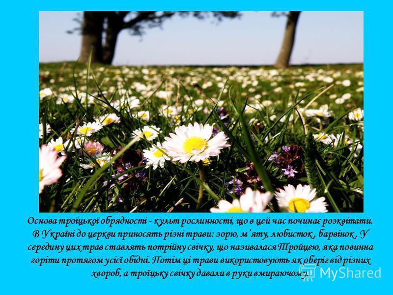 Основа троїцької обрядності - культ рослинності, що в цей час починає розквітати. В Україні до церкви приносять різні трави: зорю, мяту, любисток, барвінок. У середину цих трав ставлять потрійну свічку, що називалася Тройцею, яка повинна горіти протя