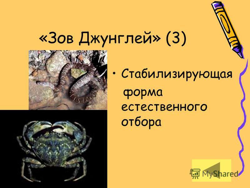 «Зов Джунглей» (3) Стабилизирующая форма естественного отбора