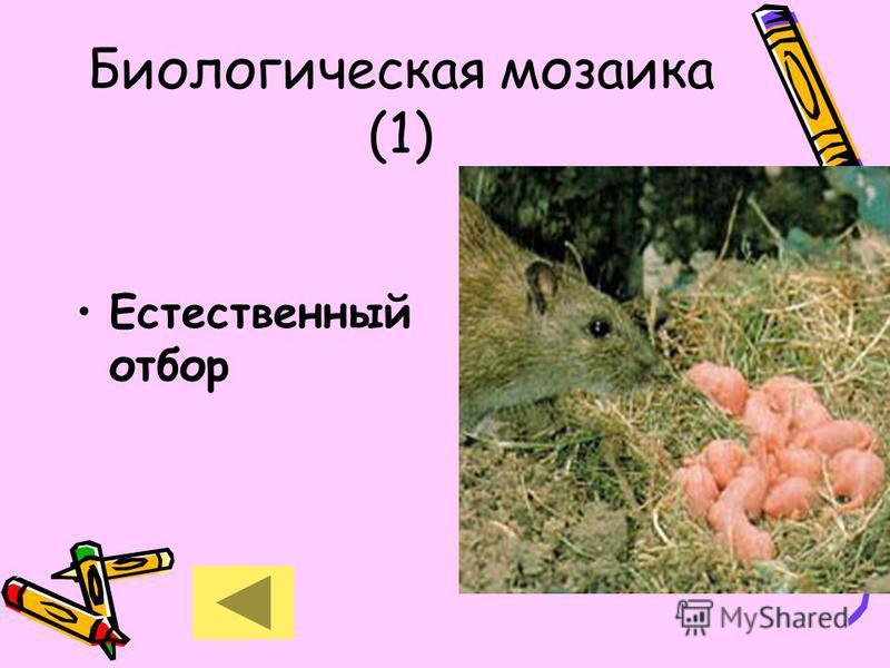 Биологическая мозаика (1) Естественный отбор