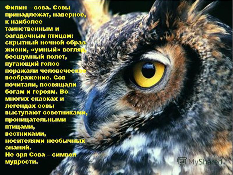 Филин – сова. Совы принадлежат, наверное, к наиболее таинственным и загадочным птицам: скрытный ночной образ жизни, «умный» взгляд, бесшумный полет, пугающий голос поражали человеческое воображение. Сов почитали, посвящали богам и героям. Во многих с