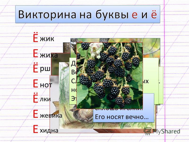Вкус у ягоды хорош, Но сорви её поди-ка: Куст в колючках будто ёж, Вот и назван… Вкус у ягоды хорош, Но сорви её поди-ка: Куст в колючках будто ёж, Вот и назван… Эту сказку ты прочтёшь Тихо, тихо, тихо… Жили-были серый ёж И его… Эту сказку ты прочтёш