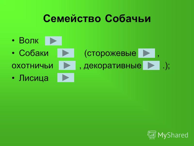 Семейство Собачьи Волк Собаки (сторожевые, охотничьи, декоративные.); Лисица