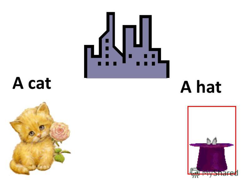 A cat A hat