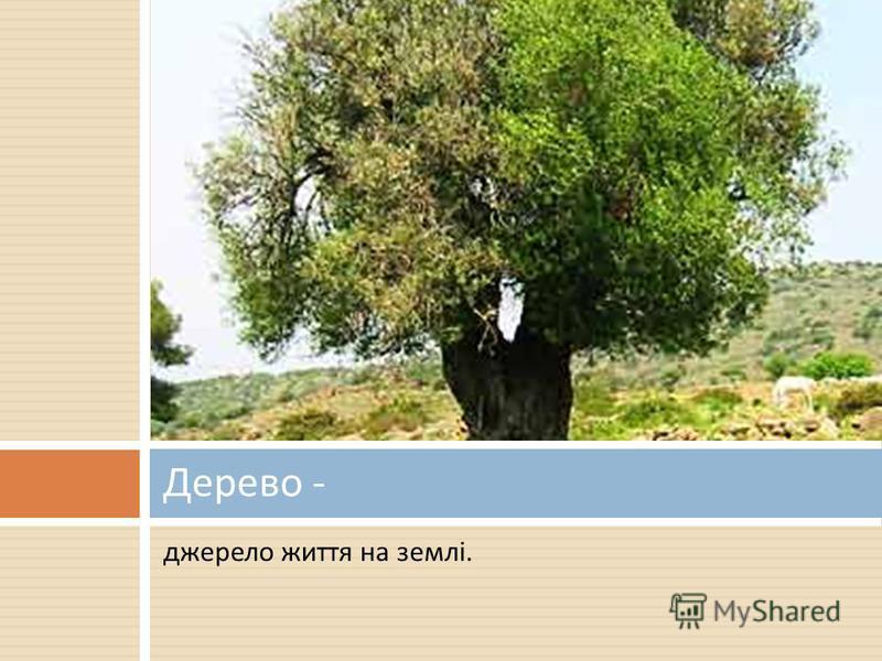 джерело життя на землі. Дерево -
