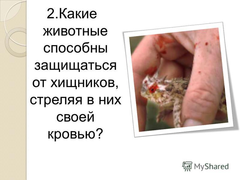 2. Какие животные способны защищаться от хищников, стреляя в них своей кровью?